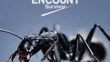 BLUE_ENCOUNT_-_Survivor_lim_DVD